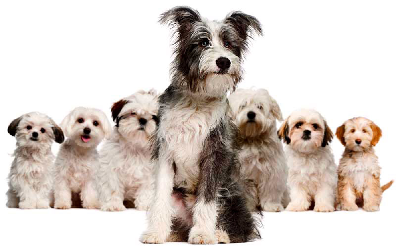 welcome_dogs
